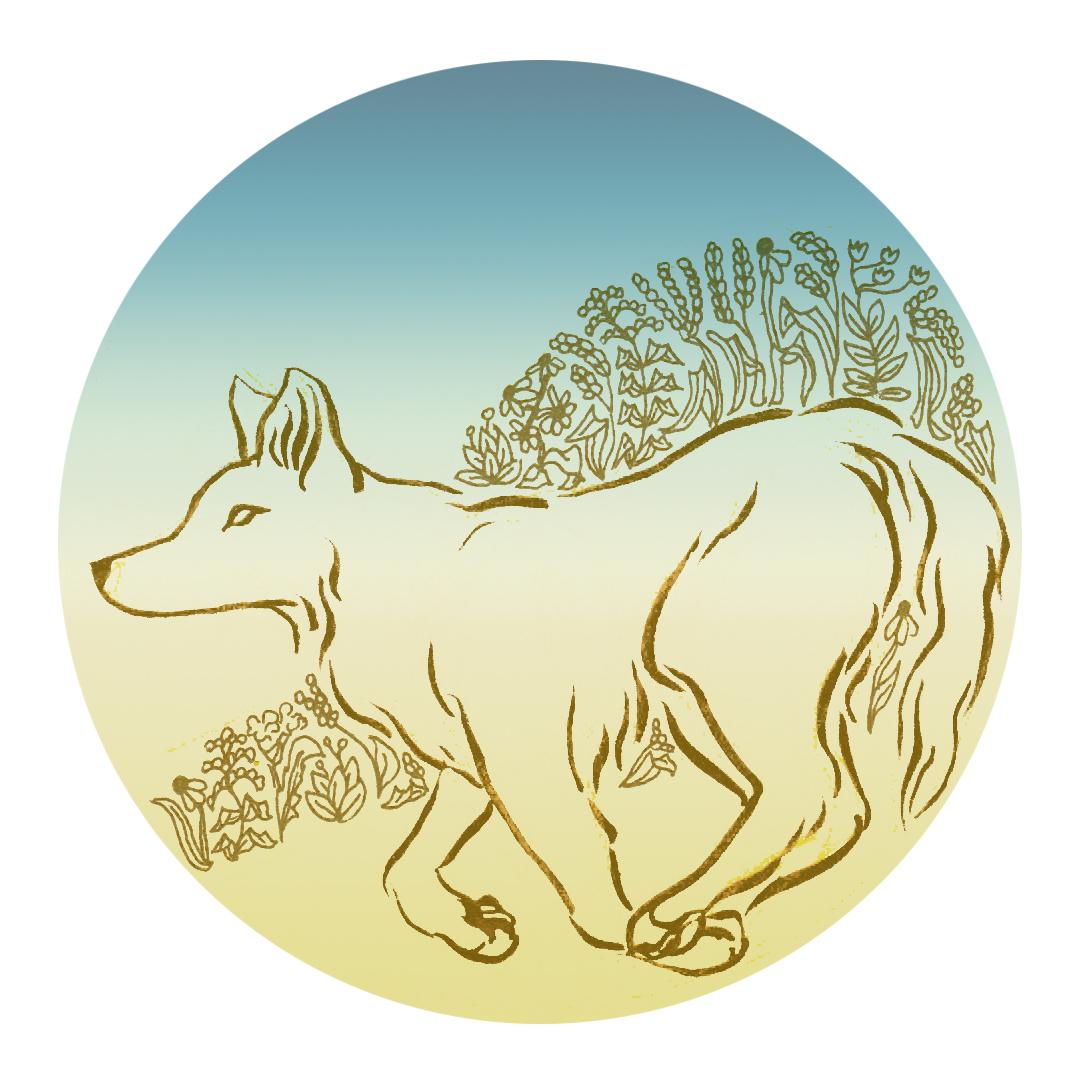 coyotes5