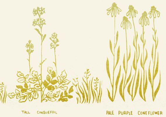 The Curtis-Alstad Prairie Flora of Wisconsin