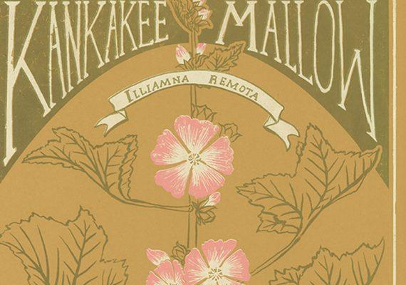 Kankakee Mallow