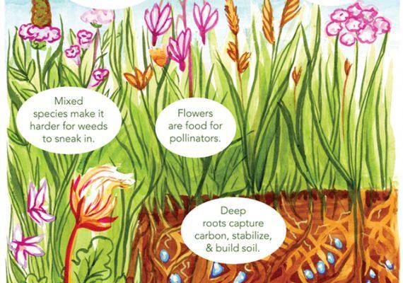 Rethinking Lawns