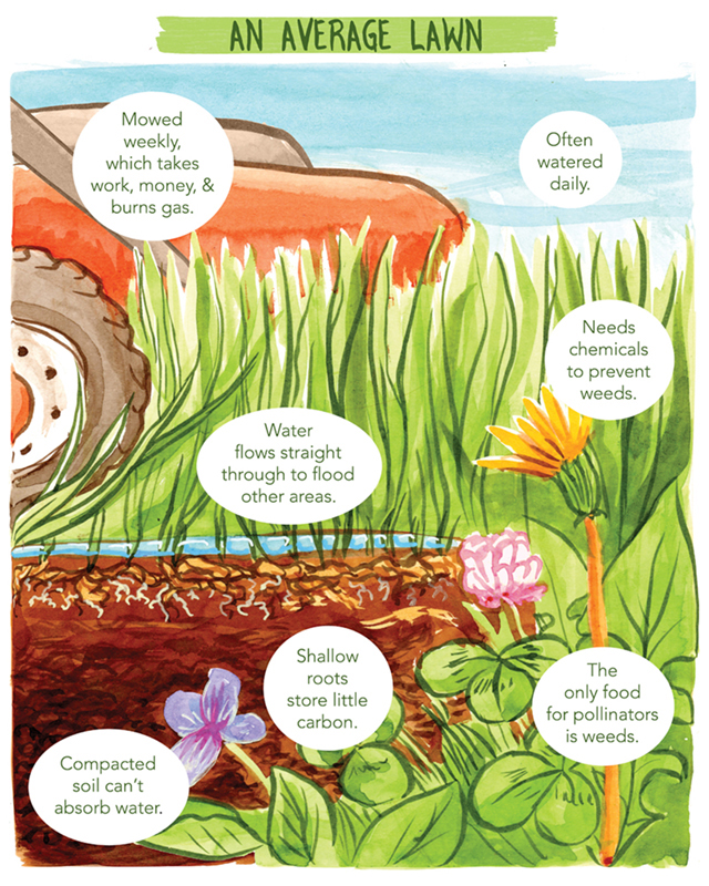 Title: An Average Lawn. Image depicts a closeup of a lawn, it's soil, its grass and weeds, and a lawnmower. Descriptive text: Mowed weekly, which takes work, money, & burns gas. Often watered daily. Water flows straight through to flood other areas. Needs chemicals to prevent weeds. Compacted soil can't absorb water. Shallow roots store little carbon. The only food for pollinators is weeds