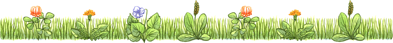 lawn-p-weeds