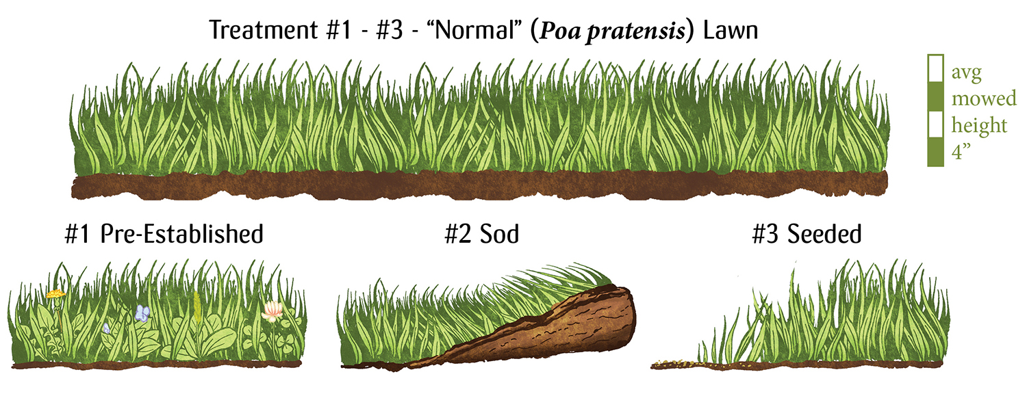 """Image: Treatment #1-3, an image of standard grass lawn, mown to average height of 4"""" #1 - Pre-established - lawn with weeds #2 - A roll of sod with green grass #3 Seeded, where grass is slowly growing in"""
