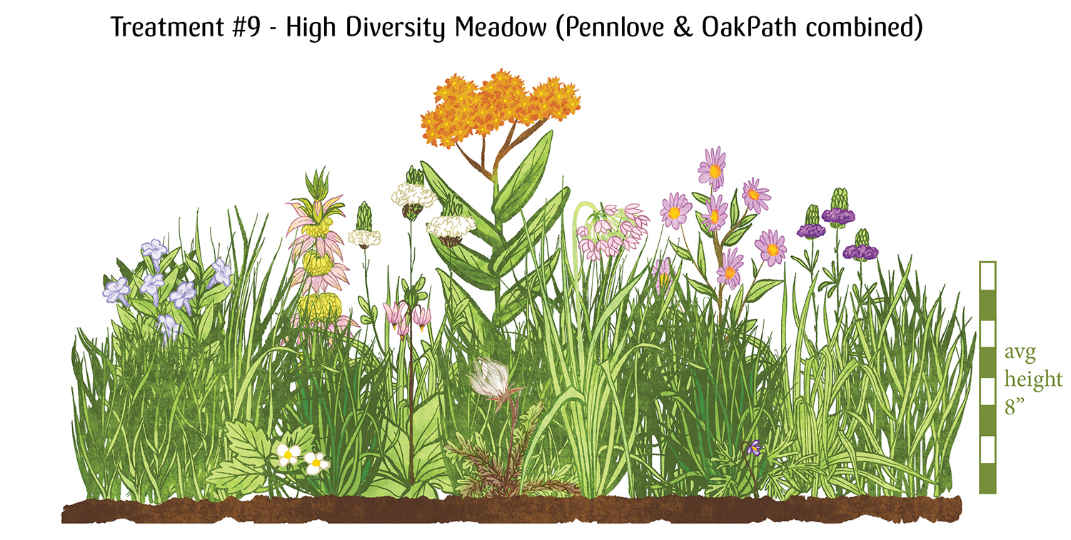 """Image: Treatment #9 - High diversity meadow (PennLove and OakPath combined). A huge variety of blooming plants and grasses mixed together to form a colorful, low-growing community around 8"""" tall."""